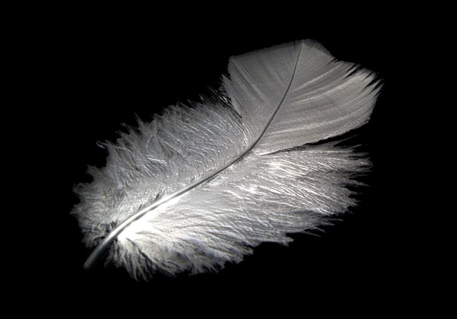 Silver Down Feather